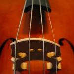 cellobridge